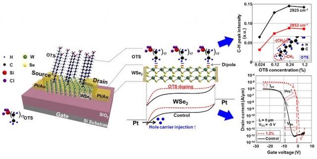 OTS가 도핑된 WSe2 전자소자 모식도 및 특성분석 - 성균관대학교 전자전기공학부 제공